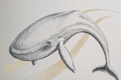 Day 27: Blue Whale